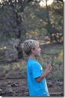 Usa - Arizona - Kaibab National Forest (3)