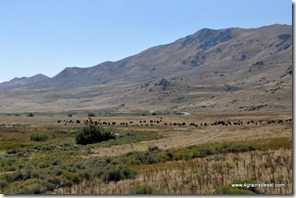 Usa - Utah - Antelope Island (11)_thumb