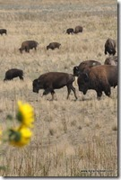 Usa - Utah - Antelope Island (21)_thumb