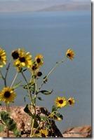 Usa - Utah - Antelope Island (4)_thumb