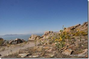 Usa - Utah - Antelope Island (5)_thumb