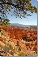 Usa - Utah - Bryce Canyon (13)