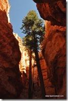 Usa - Utah - Bryce Canyon (20)