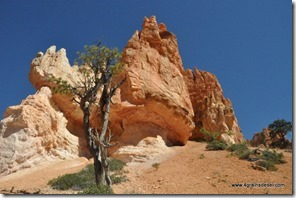 Usa - Utah - Bryce Canyon (25)