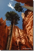 Usa - Utah - Bryce Canyon (44)