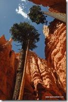 Usa - Utah - Bryce Canyon (44)