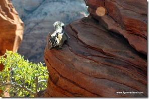 Usa - Utah - Zion National Park (18)