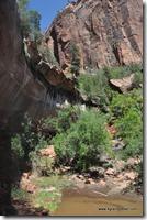 Usa - Utah - Zion National Park (36)